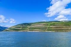 莱茵河的美丽的葡萄园 库存照片