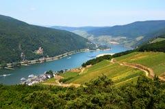 莱茵河谷在Rudesheim 库存照片