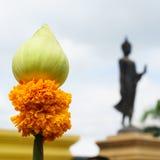 莲花和万寿菊崇拜的 库存图片
