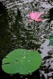莲花和叶子墨水和洗涤绘画 库存照片
