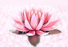莲花和珍珠 免版税库存照片