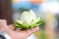 莲花在手边 库存图片