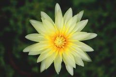 莲花在背景中 免版税库存照片