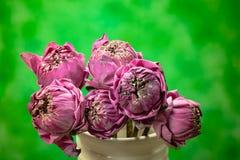 莲花在花瓶钢生活中 库存照片