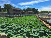 莲花在Yiheyuan,北京 图库摄影