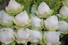 莲花是人们是普遍的环球的其中一朵花 过去常常崇拜菩萨 图库摄影