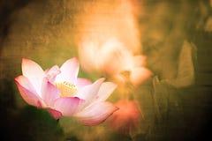 莲花桃红色纹理使用 免版税库存图片