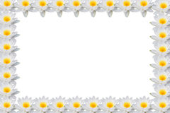 莲花框架 免版税库存图片