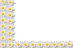 莲花框架 图库摄影