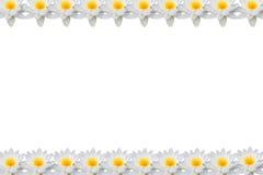 莲花框架 库存例证