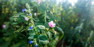 莲花植物在森林里 库存照片
