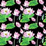 莲花水彩无缝的样式开花和花  向量例证