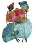 莲花水生植物原始的水彩绘画  库存照片