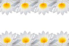 莲花的框架 免版税库存照片