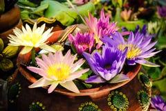 莲花的颜色在罐的 免版税库存图片