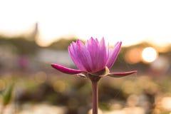 莲花自然 库存图片
