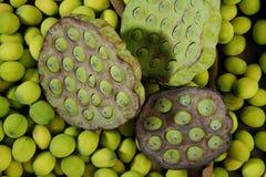 莲花荚种子 图库摄影