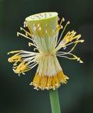莲花重点 库存图片