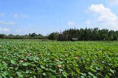 莲花领域在越南 免版税库存图片