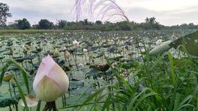 莲花领域 库存照片