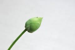 莲花,荷花 库存图片