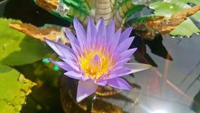 莲花紫色泰国 免版税库存照片