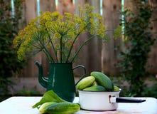 莳萝和黄瓜 免版税库存照片