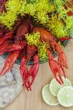 莳萝小龙虾和小树枝  免版税库存图片