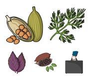莳萝,可可子,蓬蒿 草本和香料设置了在动画片样式传染媒介标志股票例证网的汇集象 库存照片