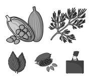 莳萝,可可子,蓬蒿 草本和香料设置了在单色样式传染媒介标志股票例证网的汇集象 库存图片