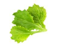 莴苣 沙拉叶子 新鲜的绿色莴苣叶子 免版税库存图片