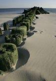他获取在海滩布赖顿Bich的绿色algas的堆年迈的停泊,美国 免版税库存照片