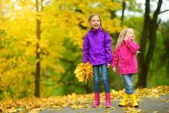 获得两个逗人喜爱的小女孩乐趣在美好的秋天天 使用在秋天公园的愉快的孩子 会集黄色秋天foliag的孩子 免版税图库摄影