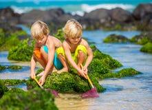 获得两个年轻的男孩在tropcial海滩的乐趣 图库摄影