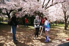获得乐趣在樱花树下 免版税库存图片