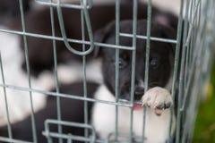 获得小的小狗使用在草和乐趣户外 免版税库存照片