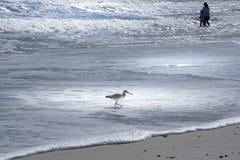 获得的威利特和的人们在佛罗里达海滩的乐趣 库存图片