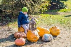 获得的小男孩乐趣用在南瓜补丁的南瓜在农场 库存照片