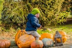 获得的小男孩乐趣用在南瓜补丁的南瓜在农场 免版税库存图片