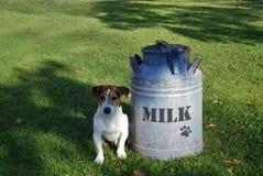 获得的牛奶 免版税图库摄影