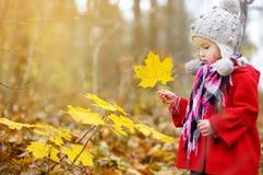 获得逗人喜爱的小女孩乐趣在美好的秋天天 使用在秋天公园的愉快的孩子 会集黄色秋叶的孩子 免版税图库摄影
