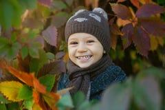 获得逗人喜爱的小男孩乐趣在美好的秋天天 使用在秋天公园的愉快的孩子 孩子的秋天活动 免版税库存照片
