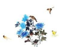 菊花传统看法  免版税库存图片