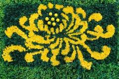 菊花分配为花坛的区域 图库摄影
