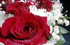 菊花和玫瑰 免版税库存照片