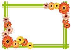 菊花框架 库存照片