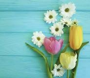 菊花母亲节美丽的郁金香,在蓝色木背景 免版税库存照片