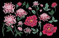 菊花的传染媒介手凹道无缝的样式 库存照片