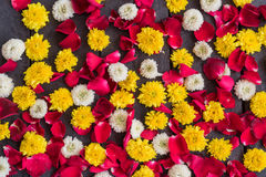 菊花花和红色瓣玫瑰 免版税库存照片