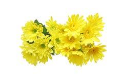 菊花花束在白色背景中 免版税库存图片